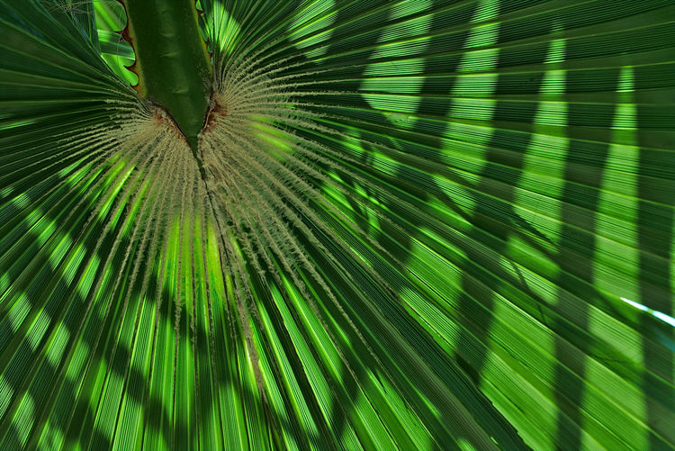 Animal Animal Themes Animal Wildlife Beauty In Nature Close-up Day Full Frame Green Color Growth Leaf Nature No People One Animal Outdoors Palm Leaf Palm Tree Plant Plant Part Purity Tree Tropical Climate Vertebrate