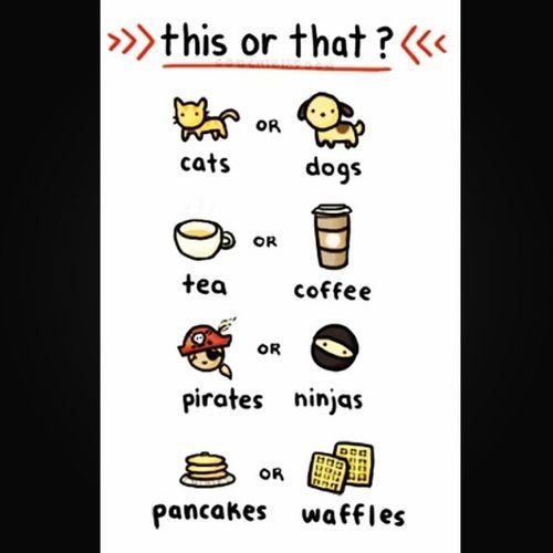 Qotd: Comment which u prefer :3 me: cats :} Coffee Pirates >:) Pancakes Thisorthat Cats Cat Kitten dog cute coffee tea pirate pirated pancakes waffles foodporn f4f fff follow4follow followforfollow