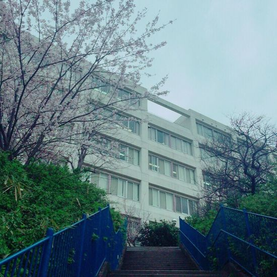 my school🏫🌸 School Highschool サクラ Cherry EyeEm Flower EyeEm Best Shots Nature Photography Spring Flowers Cherry Blossoms Spring Cherry Tree Beautiful Japan Sakura Sakura2016 ❤