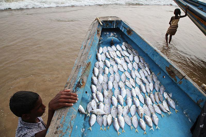 On the beach in Puri, Odisha state, India. India Puri Odisha Street Photography Streetphotography Water People Fish Sea