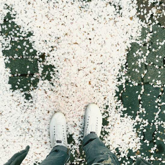 한국 벚꽃 아름다운 봄