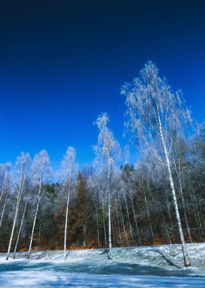 Cold   Snow Nature Blue Tree Beauty In Nature Winter Tranquility Cold Temperature Scenics Landscape Tranquil Scene Sky Night No People Outdoors Clear Sky Star - Space Milky Way Astronomy Nature Birch Tree Nature_collection Nature Photography EyeEm Nature Lover Eye4photography