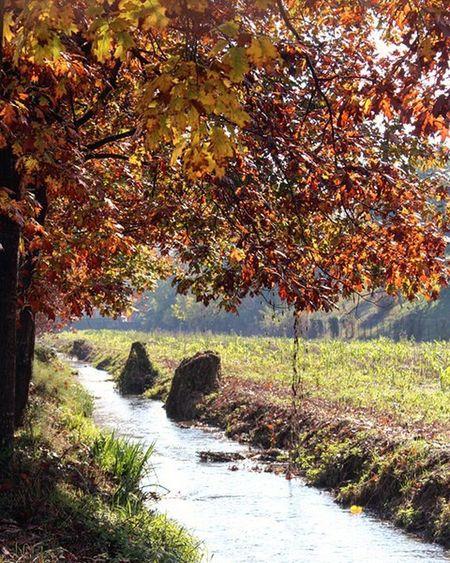Autumn Autunno  Castelleone Foliage2015 Nature
