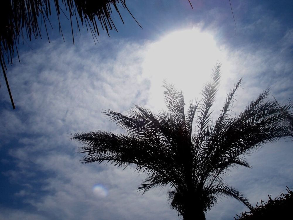 High noon at tropical beach. Low Angle View Sky Palm Tree Tree Cloud - Sky Nature No People Growth Outdoors Tranquility Day Scenics Beauty In Nature Treetop Close-up Storm Storm Cloud Eye Of The Storm Sun High Noon Palm Beach Tropical Tropical Paradise Blue Sky