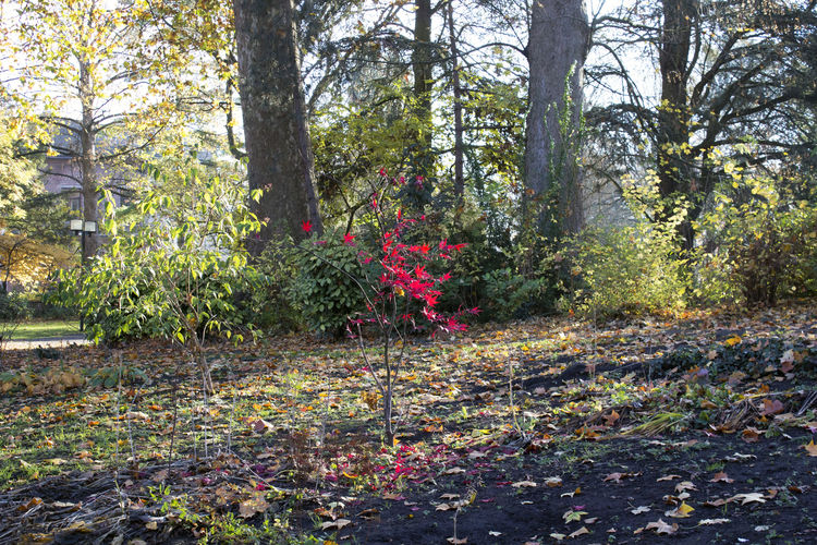 Plant Forest Beauty In Nature Tree Nature Tranquility Flower Plant Part Autumn Leaf No People Tree Trunk Outdoors Autumn Fall Spring Red Leaves Park Contrast