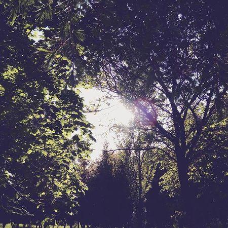 Komorebi Nature Sunlight Sunshine Trees Sun Lightandshadow Leaves Sole