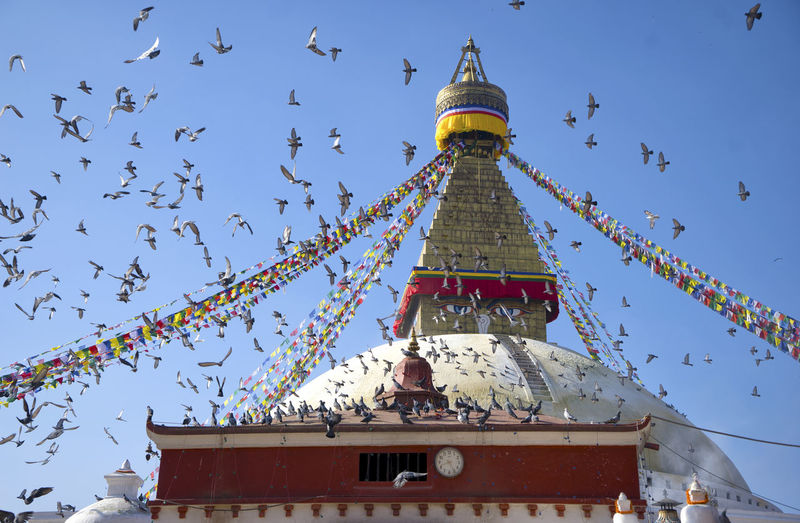 Low angle view of birds at temple