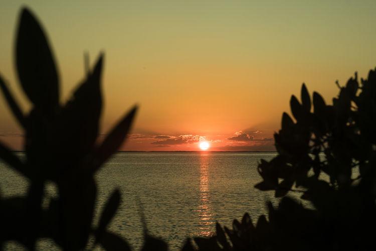 Caribe Caribean Sea Latin America Mexico Nature Beach Caribbean Coast Island Paradise Peaceful Sunset