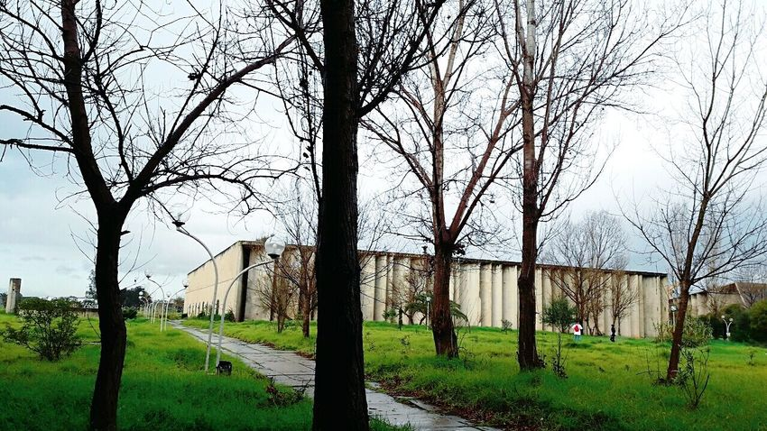Usthb University Clouds Cloud - Sky EyeEmNewHere Building Exterior Pathway Trees Bare Tree Tree Grass Sky Outdoors Day