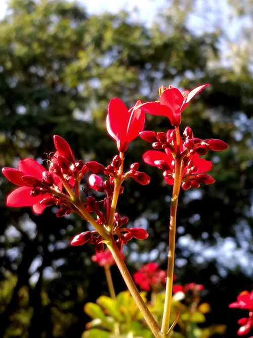 BEAUTY IN NATURE Red Flower Nature Plant Growth Focus On Foreground No People Day Beauty In Nature Fragility Close-up Freshness Tree