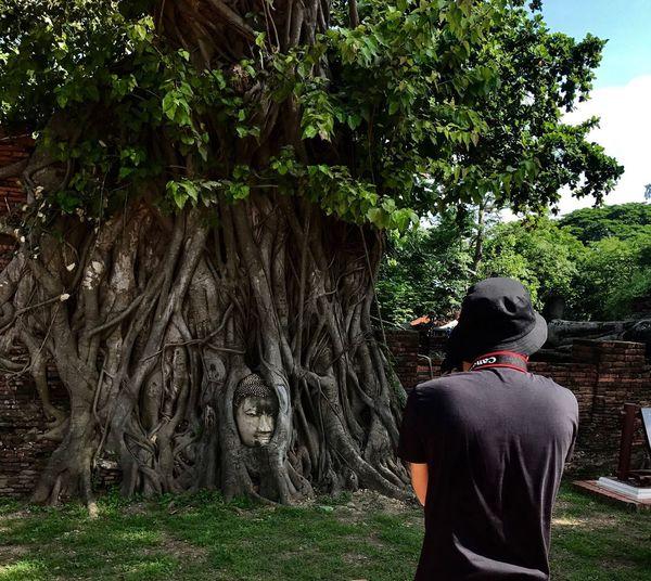 📸 Tree Plant