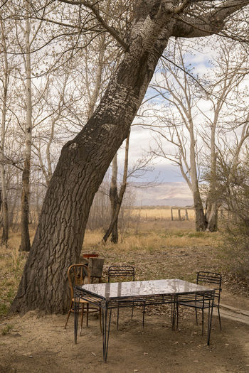 Dining in the desert Absence Bare Tree Bench Branch Day Empty Field Land Nature No People Outdoors Park Plant Seat Table Tranquil Scene Tranquility Tree Tree Trunk Trunk