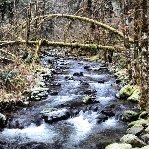 Oregon Cascades Troutcreek Corvallisbound