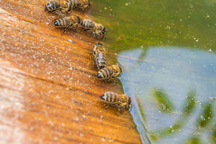 Animal Animal Themes Animal Wildlife Animals In The Wild Bee Close-up Day Group Of Animals High Angle View Insect Invertebrate Nature No People Outdoors Selective Focus Water Wood - Material