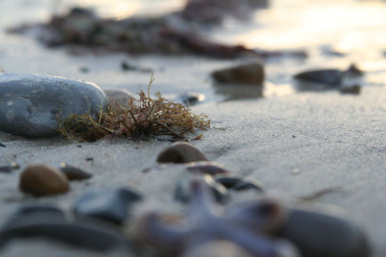 Surface level of pebble on the beach
