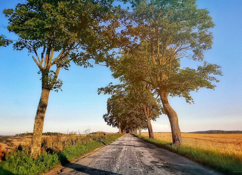 Droga Road Droga Warmia Mazury Drzewa Trees Summer Polska Poland Beautiful Willage Cute Lato Nature Natura