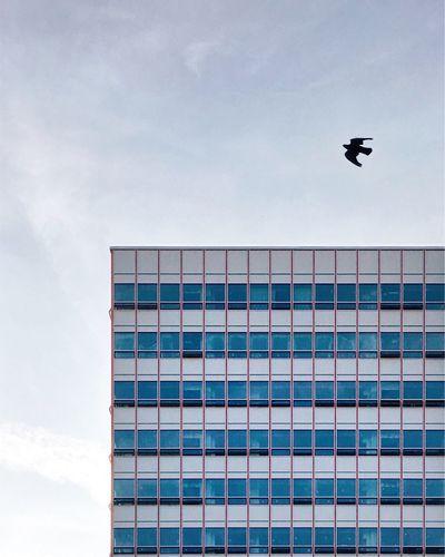 Architecture Modernism Bird Minimalism City Urban Geometry Façade Architecture_collection The Week On EyeEem