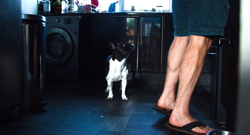 Low section of man with dog standing on tiled floor