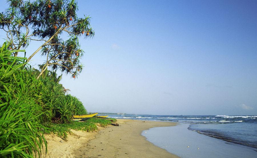A Sri Lankan beach scene Beach Blue Calm Clear Sky Coastline Day Horizon Over Water Idyllic No People Non Urban Scene Non-urban Scene Outdoors Remote Scenics Sea Shore Sky Sri Lanka Tidal Tranquil Scene Tranquility Tree Water
