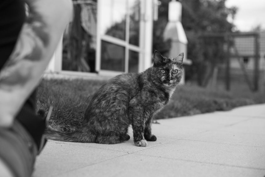 Black And White EyeEm Selects Domestic Cat Pets Animal Themes Domestic Animals Mammal One Animal Feline Sitting Close-up Outdoors No People Nature Day