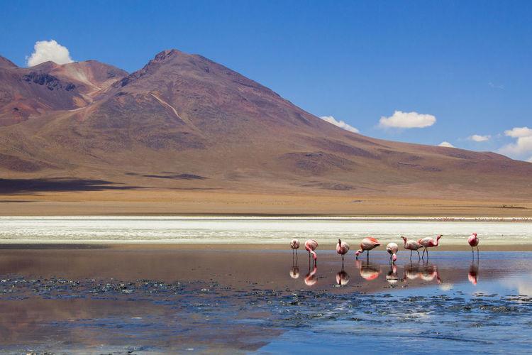 Flamingoes in lake against sky