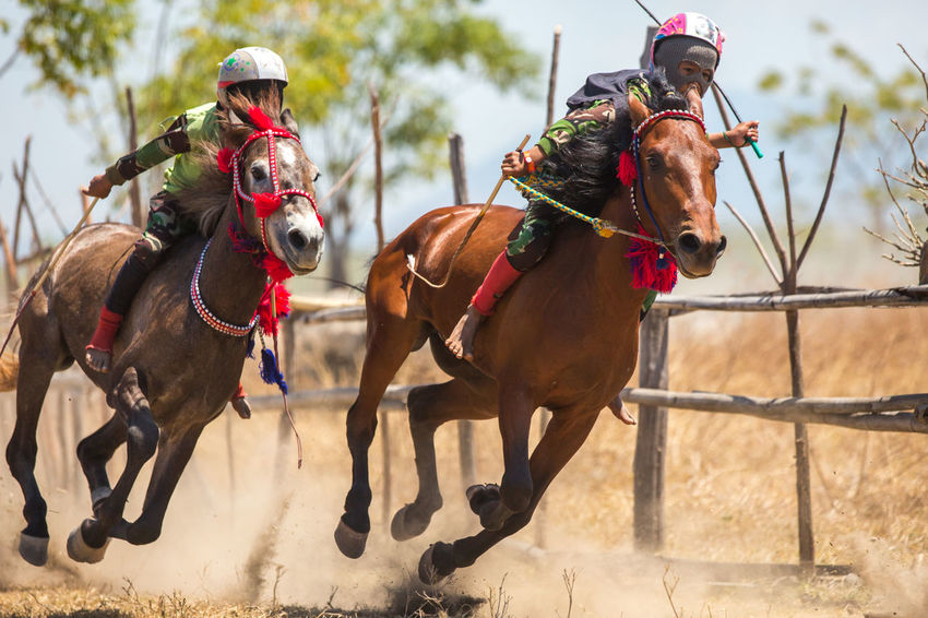 Sumbawa Besar, Indonesia - September 21, 2017: Local horse race competition held on Sumbawa Island in Sumbawa Besar, Indonesia on September 21, 2017. Children Horses INDONESIA Kids Sumbawa Sumbawa Besar Tradition Authentic Competition Culture Domestic Animals Equestrian Equine Equine Photography Horse Horse Racing Local Culture Mammal Outdoors Real People Rivalry Traditional