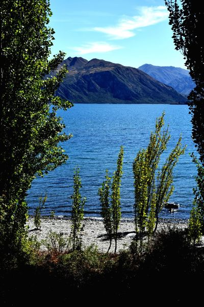 Lake Wanaka Framed By Trees Tree Water Mountain Lake Blue Sky Landscape Mountain Range Calm Growing Lakeside Standing Water Young Plant Mid Distance Sandy Beach Tranquil Scene Foreground Idyllic Tranquility Shore Countryside