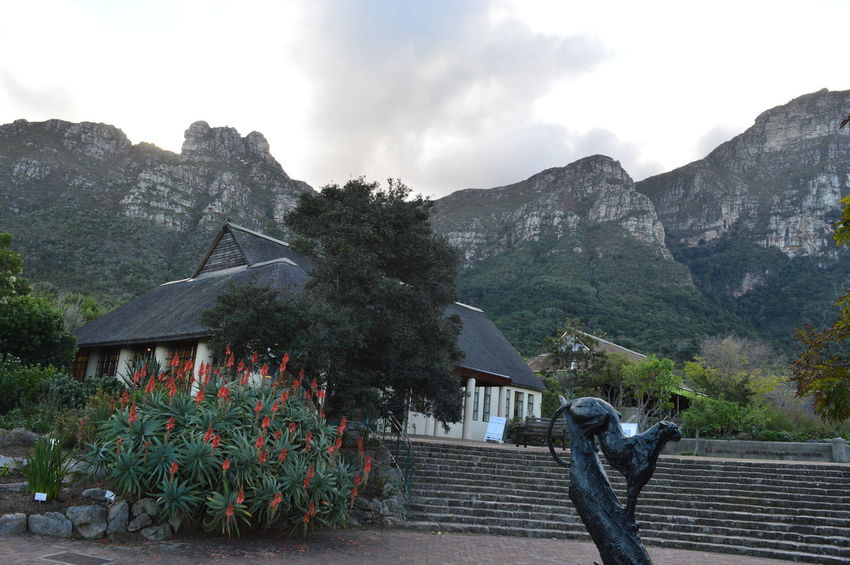 Kirstenbosch National Botanical Garden Architecture Beauty In Nature Built Structure Cloud Cloud - Sky Day Flower Growth Idyllic Kirstenbosch Kirstenbosch National Botanical Garden Mountain Mountain Range Nature No People Outdoors Plant Scenics Sky Town Tranquil Scene Tranquility Travel Destinations Tree