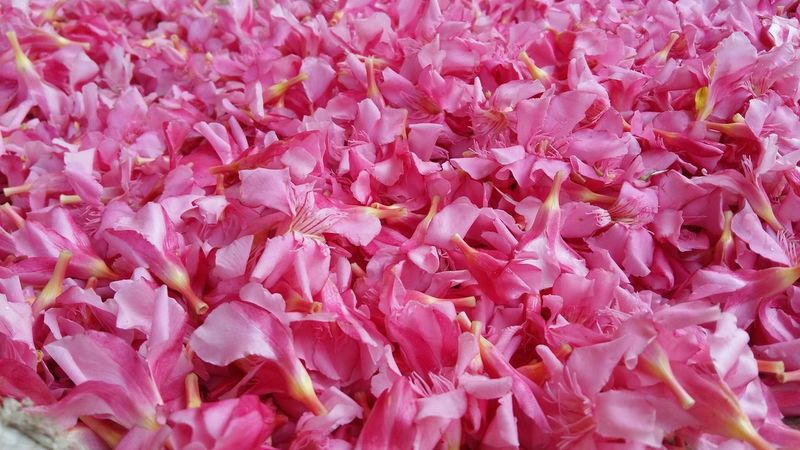 Mobilephotography Eyemphotography LookingGood EyeEm Gallery Seeing The Sights Samsungphotography Dadarstation India Mumbai My City Streetphotography Flower Collection Flowermarket Withoutedit WithoutEditing Dadar Pink Pink Flower Pink Color Pink Flowers
