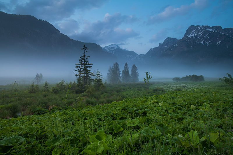 Berge Wasser Alpen Salzkammergut Almtal Österreich Nebel Nature Beauty In Nature Plant Mountain Scenics - Nature Sky Tranquil Scene Tree Tranquility Environment Landscape Cloud - Sky Growth No People Non-urban Scene Green Color Fog Land Mountain Range Outdoors