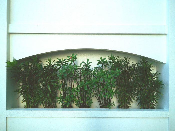 Plant No People Green Color Architecture Outdoors Streetphotography Plants Plant Green Color Minimalist Architecture