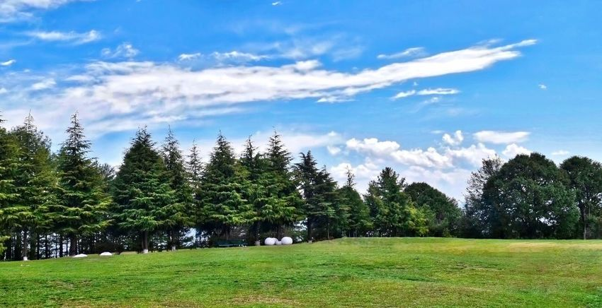 Amazing Pakistan Beauty In Nature Blue Cloud - Sky Day Forest Grass Green Color Green Fields Growth Landscape Murree, Pakistan Nature No People Outdoors Pine Sky Tree