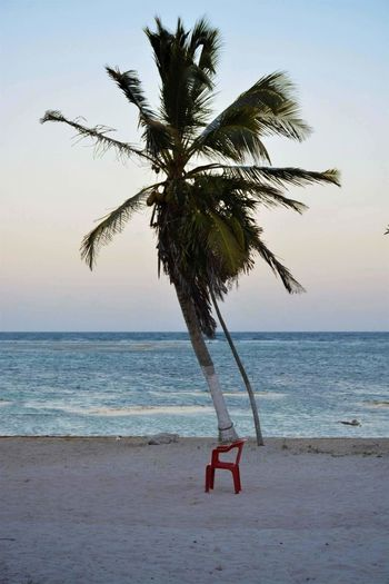 Beach Palm Tree Water Tree Horizon Over Water Sea Full Length Outdoors Beauty In Nature Carribean Sea Nature Sky Close-up Ocean View Sand Blue Tranquility Nautical Vessel The Week On EyeEm Perspectives On Nature