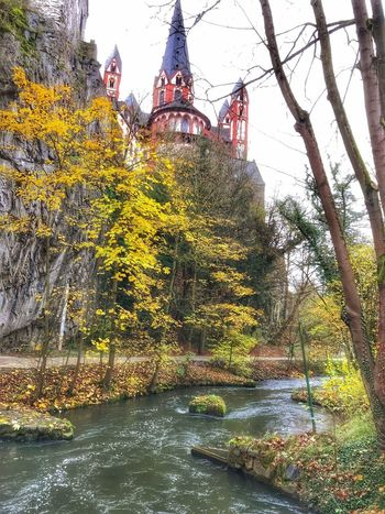 Limburger Lahn Iphonephotography IPhoneography Tree Water Autumn Nature River Day Outdoors Beauty In Nature No People Forest