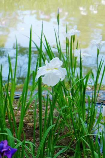 Flower FUKUSHIMA Summer