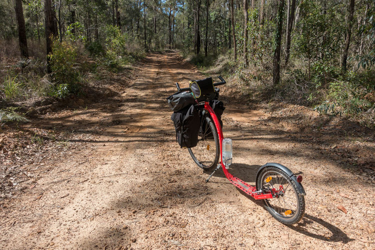 Kickbike (bicycle) on dirt road leading through forest Adventure Bicycle Day Dirt Escapism Forest Getting Away From It All Kickbike Land Vehicle Mode Of Transport Outdoors Riding Road Transportation Trees