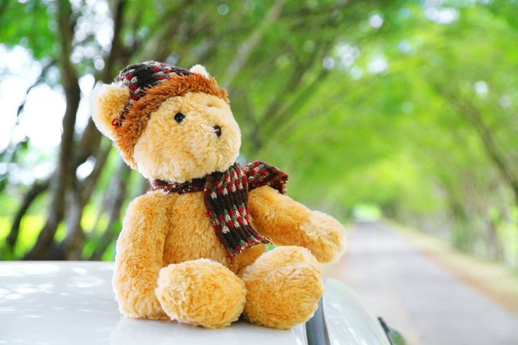 Close-up of teddy bear on car roof against trees