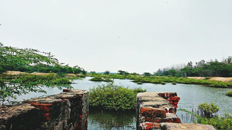 Water Reflection Nature Pronplant
