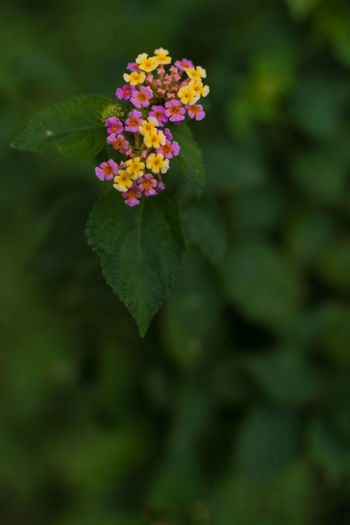 Flowers Small