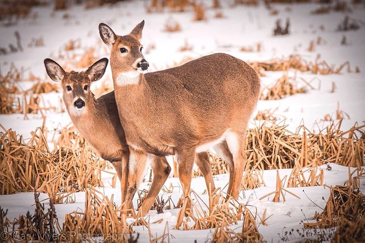 Grass Animal Themes Mammal Field Animals In The Wild Nature Beauty In Nature Deer Day Outdoors