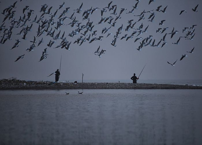 Seagulls and fisherman Silhouette Bird Animal Wildlife Animals In The Wild Flying Flock Of Birds Large Group Of Animals Animal Themes Outdoors Nature Rural Scene Flamingo Beauty In Nature Water Sky Day Adult People Only Men One Man Only
