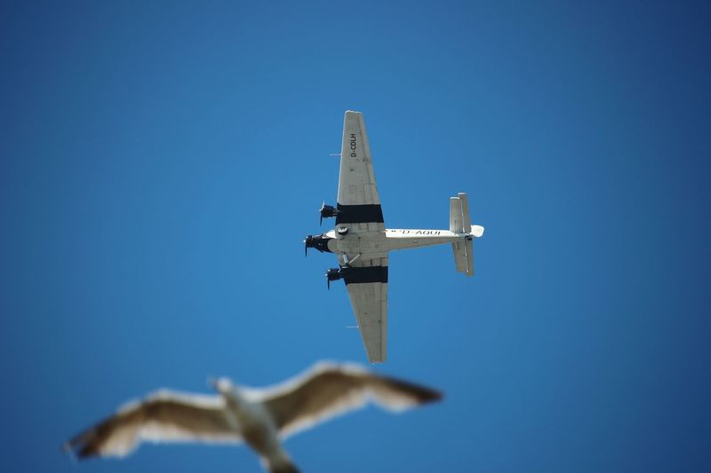 an old Junkers JU-52 and a seagull... meeting in the sky. Sky Plane Planes Seagull Crossover Two Ways Free Spirit Freedom Old Plane