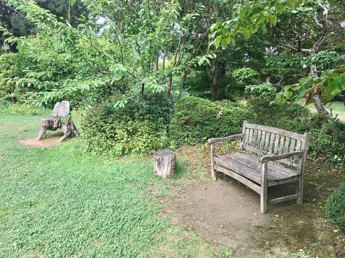 Plant Tree Seat