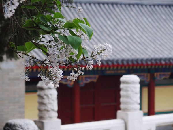 Summer Palace Flowers Tree Branches China Photos Chinese Style Chinese Architecture Chinese Culture Chinese History
