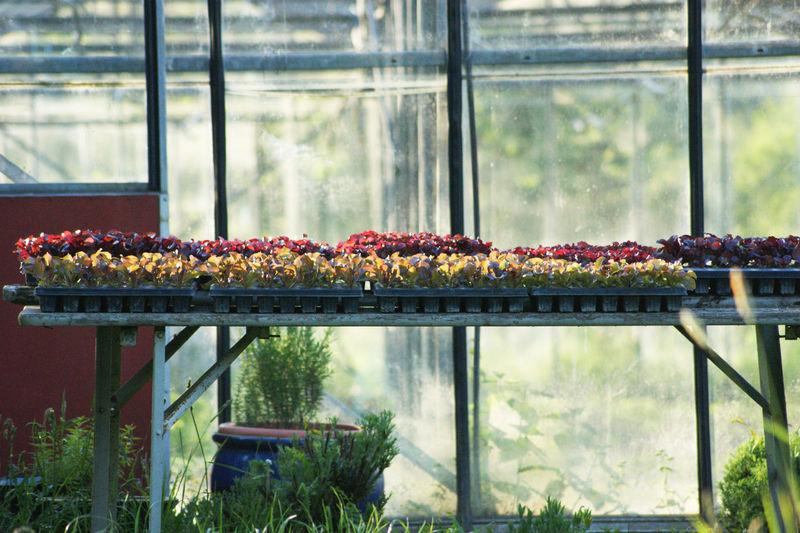 Plants on glass window