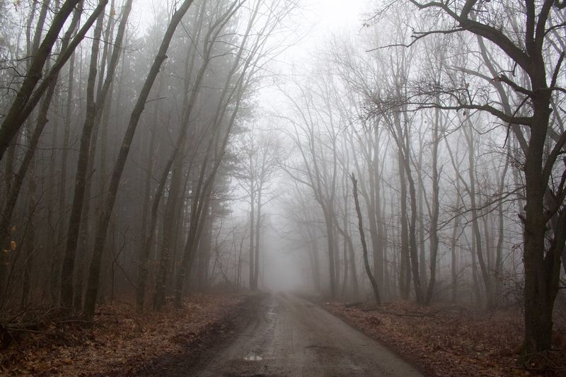 Nature Bulgaria Tree Fog The Way Forward Direction Forest Plant Road Land No People Transportation vanishing point Tranquil Scene Non-urban Scene Nature Beauty In Nature Diminishing Perspective Tranquility Autumn Landscape WoodLand