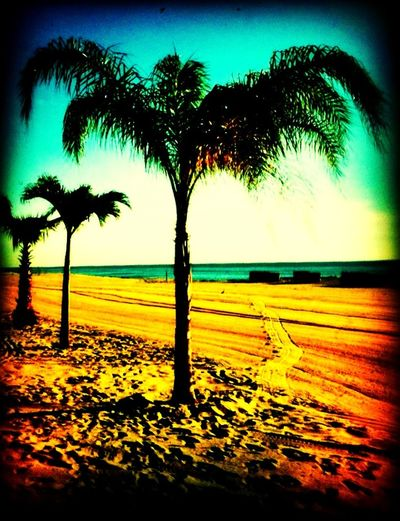 Boarding at Ocean Place Resort & Spa Boarding