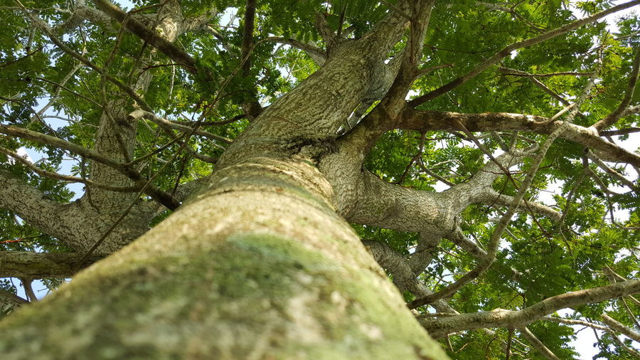 tree of life Tree Low Angle View Nature Green Color Growth No People Close-up Outdoors Day Tree Trunk Beauty In Nature Sky Inspiration Texture Relaxation Qoutation