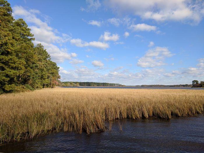 Black Water Refuge Blackwater National Wildlife Refuge EyeEm Selects Tree Black Water Marsh Nature Blue Sky Reed Grass