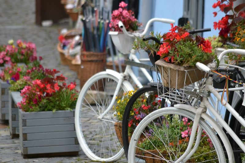 Potted plants by bicycle against wall